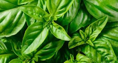 Il Gusto Pesto Vert - Galbani